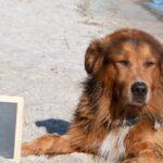 Spiaggia per cani Olanda: le 8 più belle spiagge per cani in Olanda 2021 (con mappa)